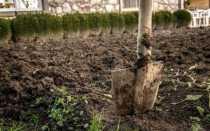 Чем обработать землю весной: способы и рекомендации