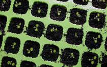 Выращивание земляники из семян в домашних условиях: правила