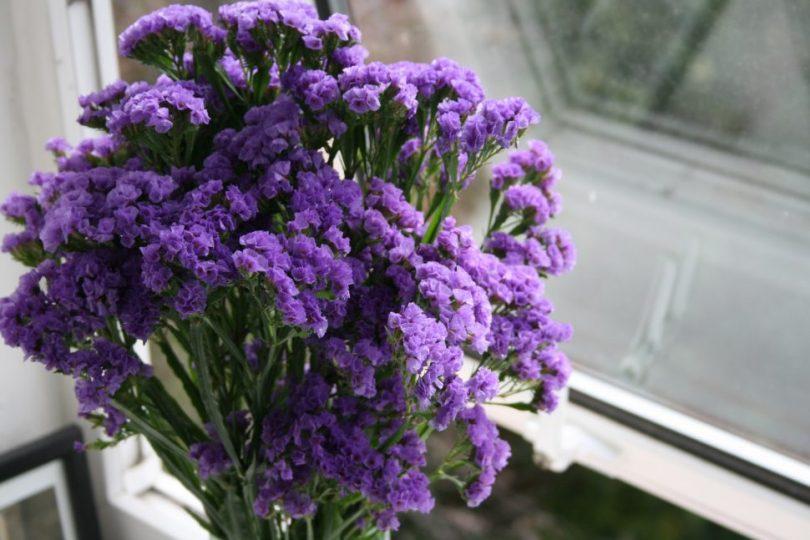 цветы статица посадка и уход фото