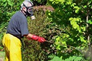 Фунгицид Топаз: инструкция по применению на винограде, как обрабатывать растения от мучнистой росы