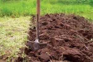 Как посадить яблоню правильно советы садоводу