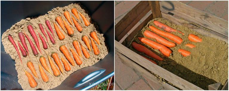 Как хранить морковь в домашних условиях в квартире