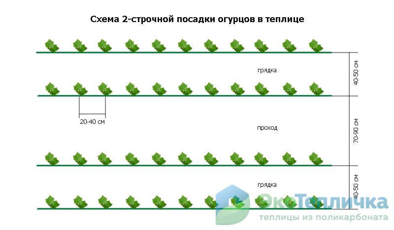Грядки для огурцов в теплице: требования к грунту, основные виды гряд, особенности формирования тёплых, высоких, грунтовых грядок, правила посадки