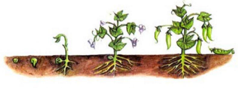 вегетационный период деревьев