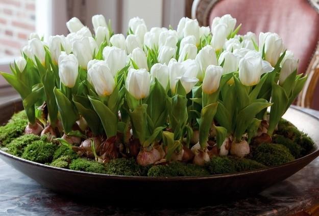 Тюльпаны в горшках на улице на зиму. Как вырастить тюльпаны дома зимой