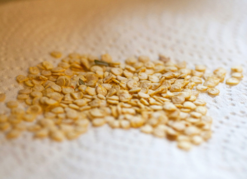 Замачивание семян перца перед посадкой в марганцовке