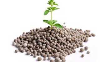 Фосфорные удобрения: разновидности и названия, значение и применение, минеральные прикормки