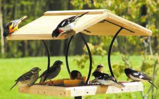 Кормушка для птиц своими руками — 20 лучших идей инструкции!
