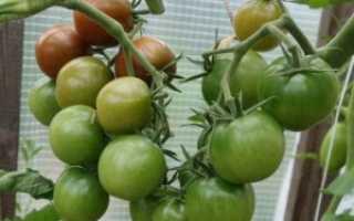 Как вырастить урожайную рассаду помидоров в домашних условиях