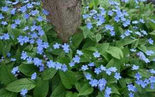 Тенелюбивые многолетники для сада: фото описание