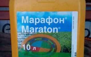 Марафон гербицид концентрат суспензии BASF