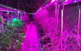 Лампа для растения