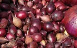Хранение лука севка до посадки: как и где хранить лук севок до посадки в квартире