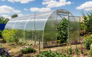 Сидераты для теплиц и огородов