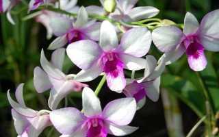 Удобрение орхидей для цветения в домашних условиях