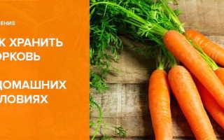 Как хранить морковь в домашних условиях в квартире и частном доме