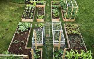 Огород: 100 фото как красиво и практично сделать грядки