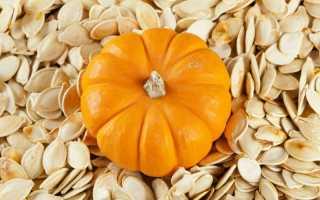 Семена тыквы — сорта для открытого грунта