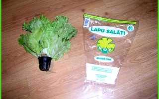 Выращивание салата в теплице зимой на продажу — Всё про теплицы