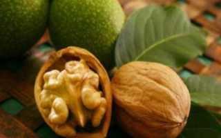 Как посадить и вырастить грецкий орех из ореха в домашних условиях