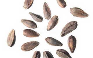 Остеоспермум выращивание из семян в домашних условиях Посадка и уход в открытом грунте Когда сеять
