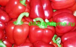 Когда сажать перцы на рассаду в 2019 году: календарь посадок и подготовка семян, выращивание рассады