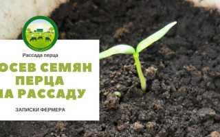 Посадка перца на рассаду: как посадить и посеять семена сладкого болгарского перца правильно, а также почему оптимальный срок для высадки — конец февраля?
