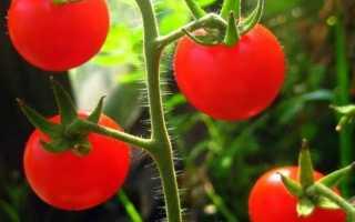 Лучшие сорта томатов черри описание с фото