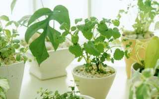 10 законов выращивания комнатных растений