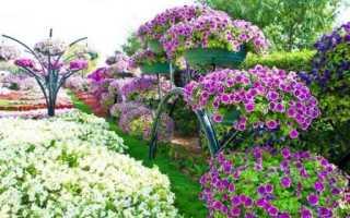 Как выращивать петунию из семян в домашних условиях