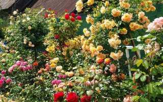 ТОП – 19 неприхотливых долгоцветущих многолетников