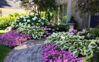 Что любит ваша хоста? Посадка и уход за хостами в саду