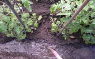 Сернокислый калий (сульфат калия): применение удобрения на огороде, инструкция для чего