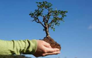 Азотные удобрения: что это такое, какие бывают? Их значение и применение
