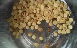Как посеять сладкий перец на рассаду в домашних условиях Когда сеять и как вырастить рассаду сладкого перца видео