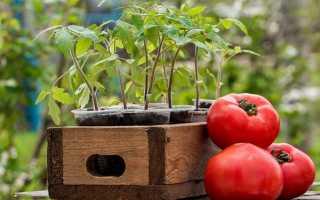 Выращивание рассады томатов — 3 легких способа с инструкциями!