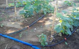 Полив огорода – оборудование своими руками: правила подборки и монтажа!