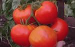 Семена Томатов Как Сделать Из Своих Помидор (2 Способа)