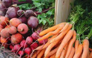 Уход за морковью в открытом грунте: как вырастить, чтобы был хороший урожай, секреты