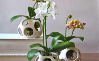 Как часто поливать орхидею фаленопсис в домашних условиях