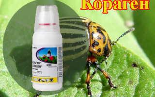 Инсектицид Кораген — инструкция по применению и нормы расхода