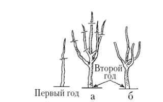 Способы формирования кроны плодовых деревьев