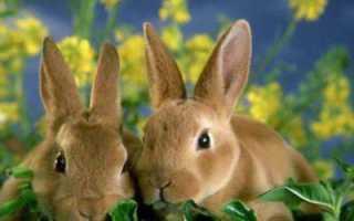 Кроличий навоз как удобрение: отзывы