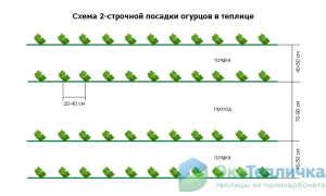 Оптимальная схема посадки огурцов в теплице — планы грядок