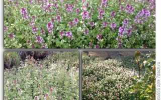 Почвопокровные многолетники: личный опыт выращивания