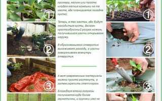 Схемы, видео, посадка, уход и все про то, как вырастить сладкий перец в теплице из поликарбоната